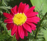 kwiatek2.jpg